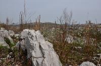 秋吉台の石灰岩