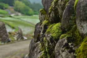 棚田の石垣