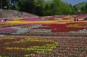初恋の丘(花で絵を描いてある)