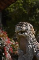 領家八幡神社 狛犬