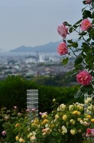 バラ園から見た五日市の町