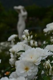 彫刻と白いバラ