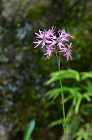ロックガーデンの花
