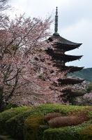 瑠璃光寺五重の塔