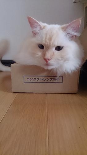 箱入り息子_1