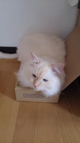 箱入り息子_2