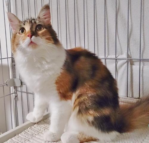 小豆猫13