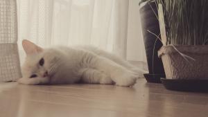 白玉猫4-3