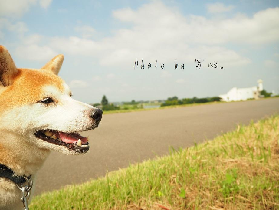 P9090046-C.jpg