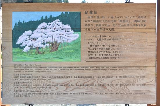 氷菓桜001