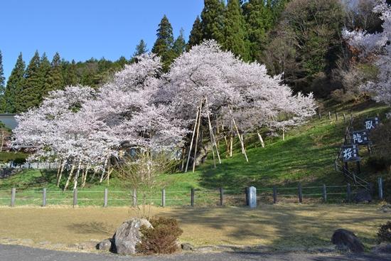 氷菓桜012
