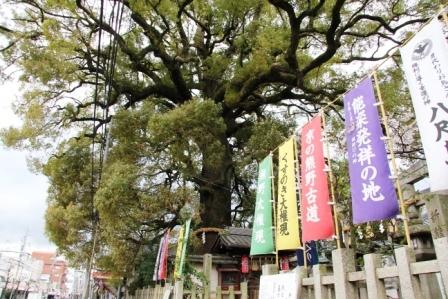 新熊野神社の大クスノキ_H26.04.05撮影