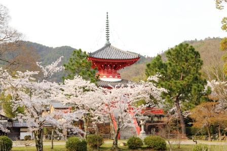 桜の心経宝塔_H26.04.05撮影