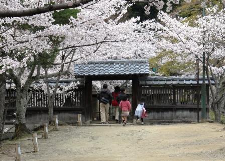 大沢池入口辺り_H26.04.05撮影