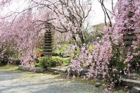 桜と石塔_H26.04.08撮影