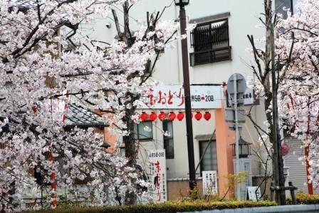 宮川町の京おどり_H26.04.05撮影