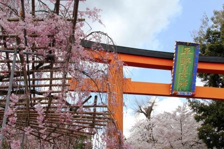 平野神社_H26.04.05撮影