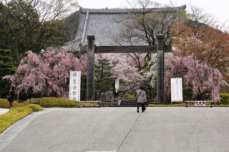 智積院の桜_H26.04.06撮影