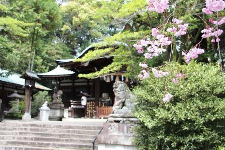 岡崎神社本殿_H26.04.06撮影