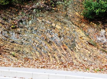 衣笠山の褶曲地層_H26.04.05撮影