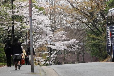 きぬかけの道の桜_H26.04.05撮影
