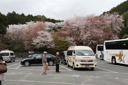 龍安寺の駐車場_H26.04.05撮影