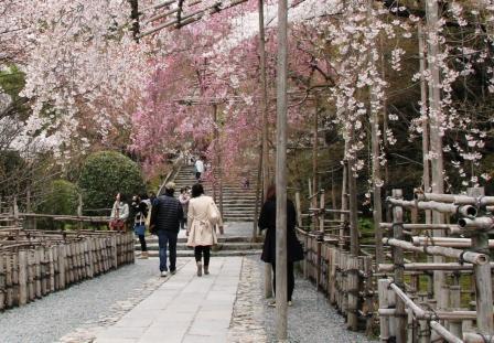 石段と桜_H26.04.05撮影