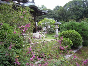 IMG_8538萩の秋篠寺