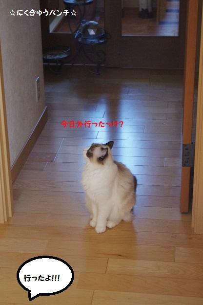 14IMGP2036.jpg