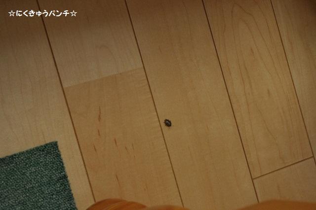 14IMGP2068.jpg