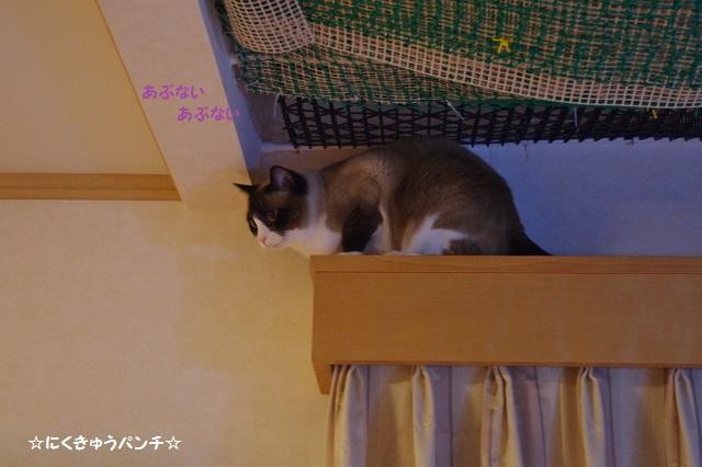 14IMGP2164.jpg