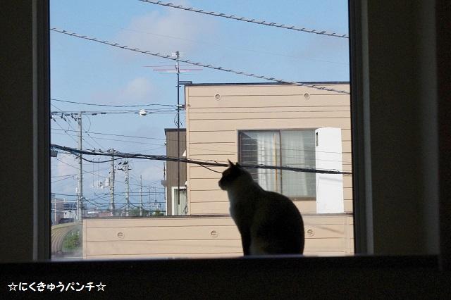 2014IMGP8545.jpg