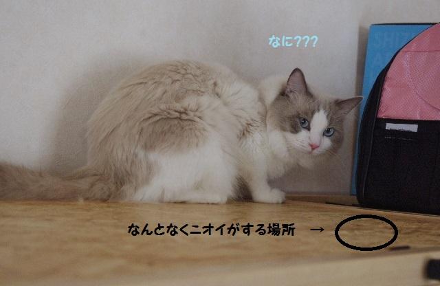 NPIMGP9418.jpg