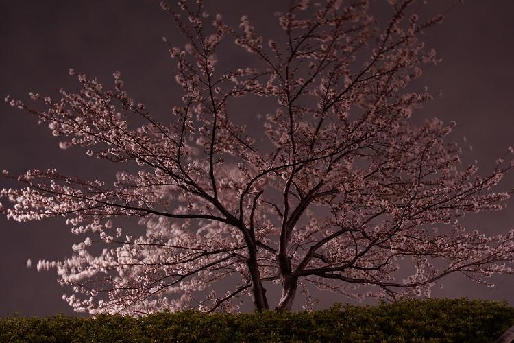 20140331南山田1-1a