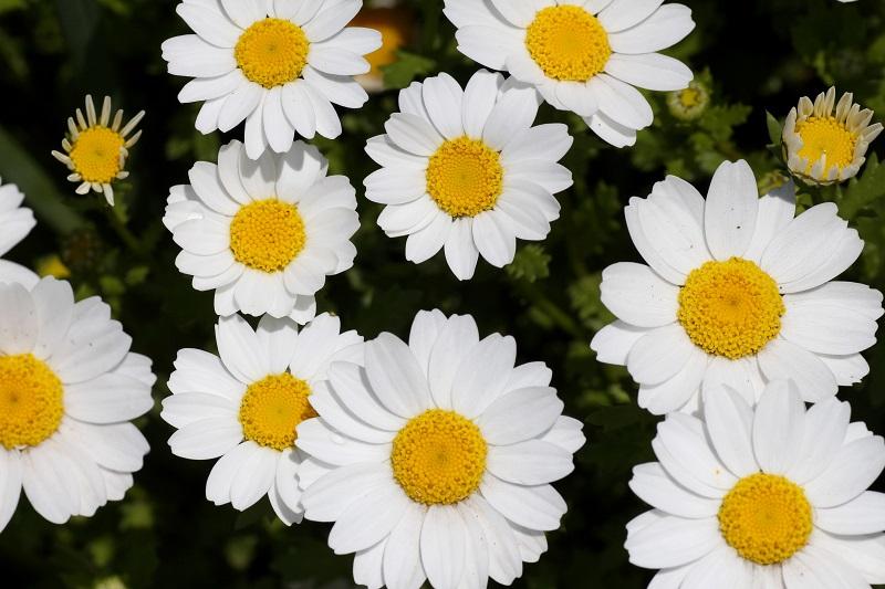 20140406ほほえみの花壇8-1a