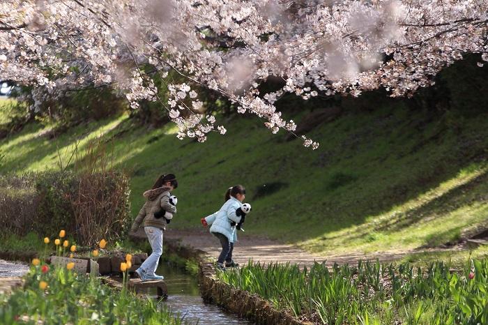 20140405江川せせらぎ緑道9-1a