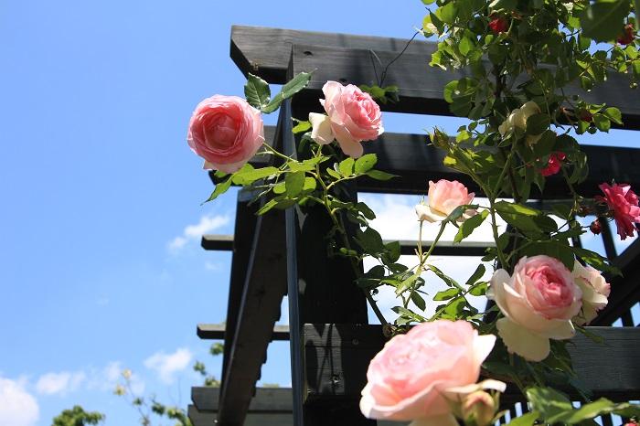 20140518荏子田太陽公園9a
