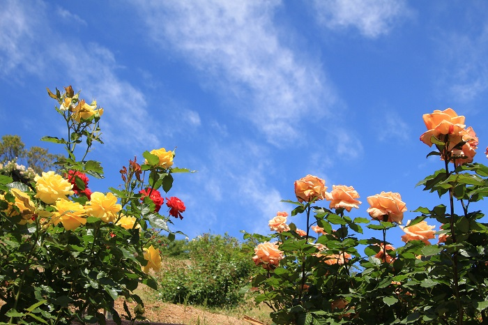 20140517荏子田太陽公園20a