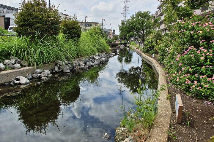 20140831江川せせらぎ遊歩道H-1a