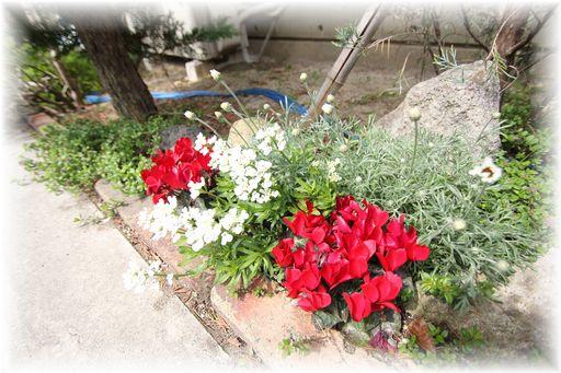 20140412赤い花