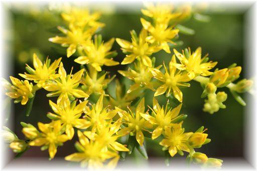 20140511黄色い花