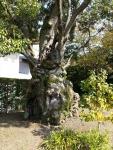 お茶席の庭園1