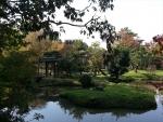 お茶席の庭園2