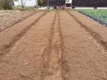 11月18日畝をきれいにして。