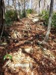 ブナの落ち葉道
