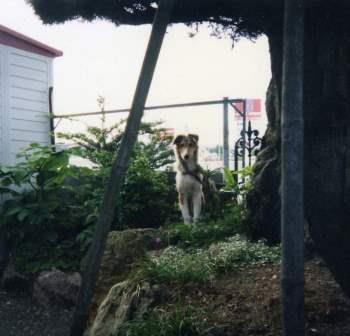 小型犬より大きい石
