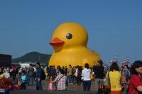 本物の黄色小鴨140203