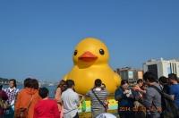 黄色小鴨正面140203