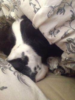 ベッドで一緒に寝たのだ