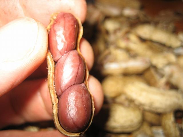 20140222茹でピーナッツ (2)